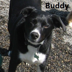 BUDDY 14