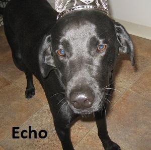 ECHO 14
