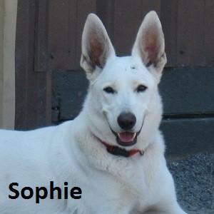 SOPHIE H 14