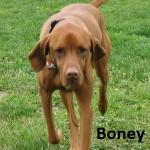 BONEY 15
