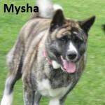 MYSHA 15